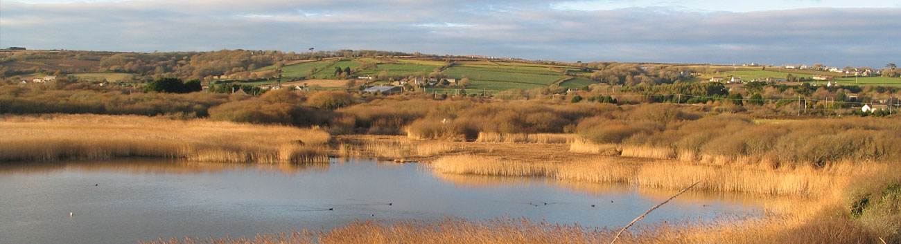 Marazion Marshes are wonderful for bird watching