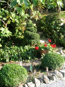 Topiary balls and spirals against some old stone steps
