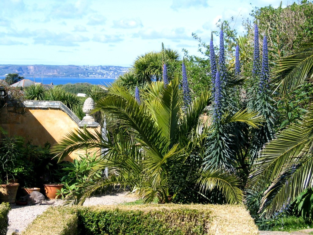 Sub tropical planint in a sheltered garden in cornwall