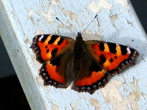 Butterfly on a garden bench