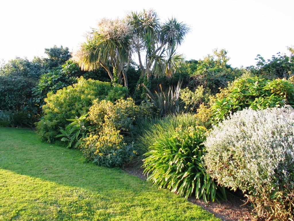 Evening light in the garden