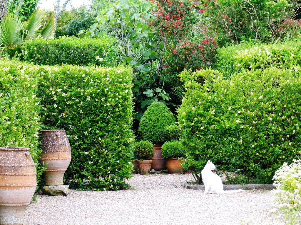 Topiary and cats in the summer garden