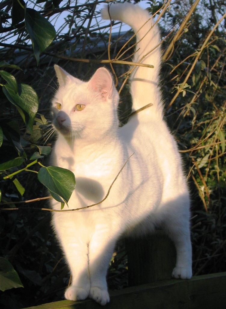 Alert tom cat
