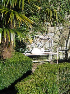 Cat on a bench in a rfemal courtyard garden Ednovean Farm