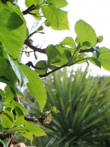 Spring growth, bright greenleaves