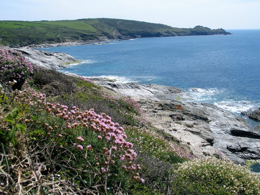 Cornwall's blue clear seas adn wild flowers at cudden point