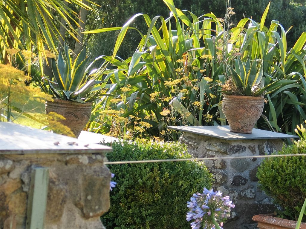 Terracotta pots with Agave framing an entrance