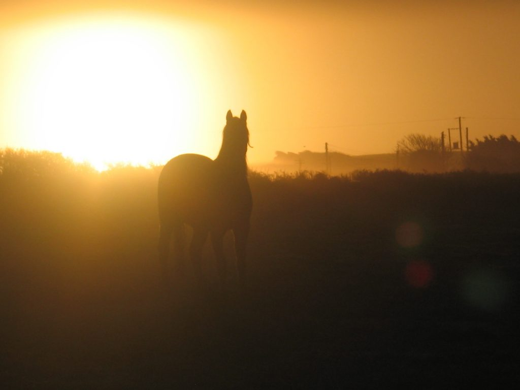 Horses in the sunrise