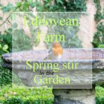 Robin on a birdbath spring stirs in the garden