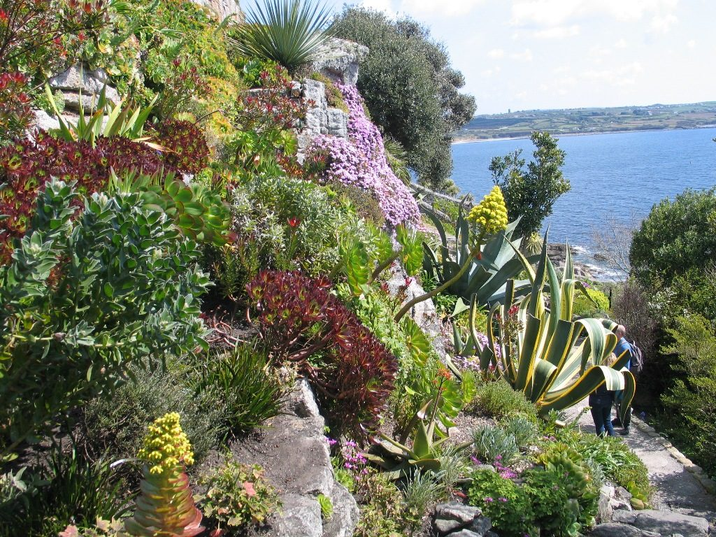 dramaic sub tropical garden at st michael's mount