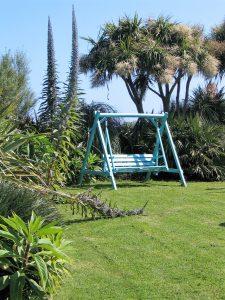 cordyline australis in full flower - ednovean farm garden