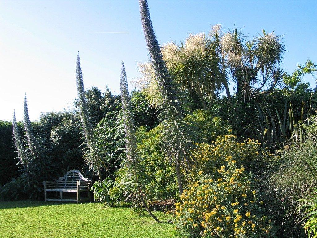 Echiums framing a lawn - ednovean farm garden