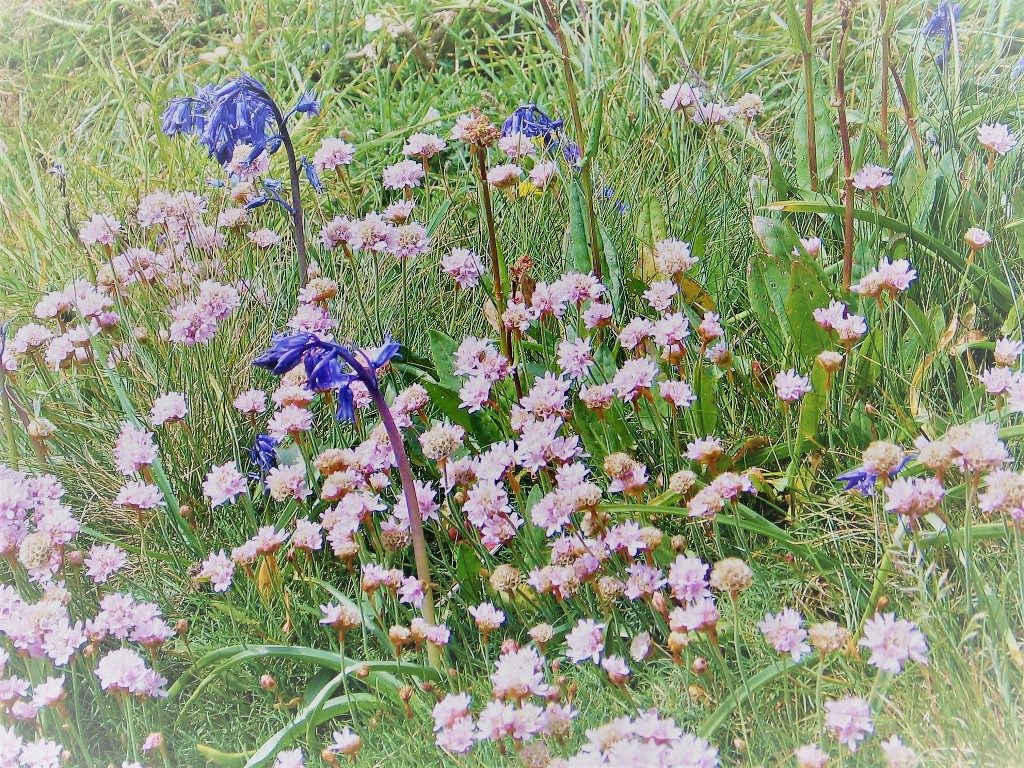 wild flowers in natures garden at Land's End