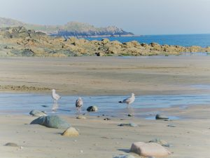 Empty sands and gulls- Perranuthnoe beach