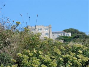 acton castle - with clifftop flowers