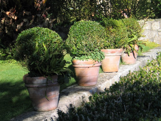 line of terrocata pots filled with box topiary