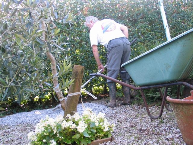 white flowers - man working