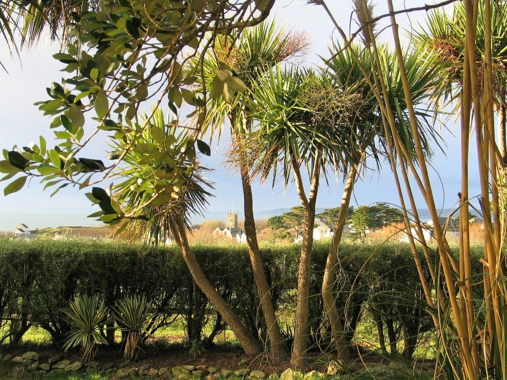palms with Perranuthnoe below a garden