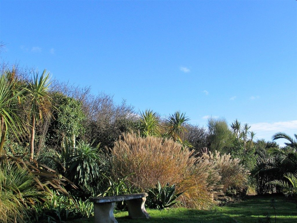 Garden border below blue skies - garden diary
