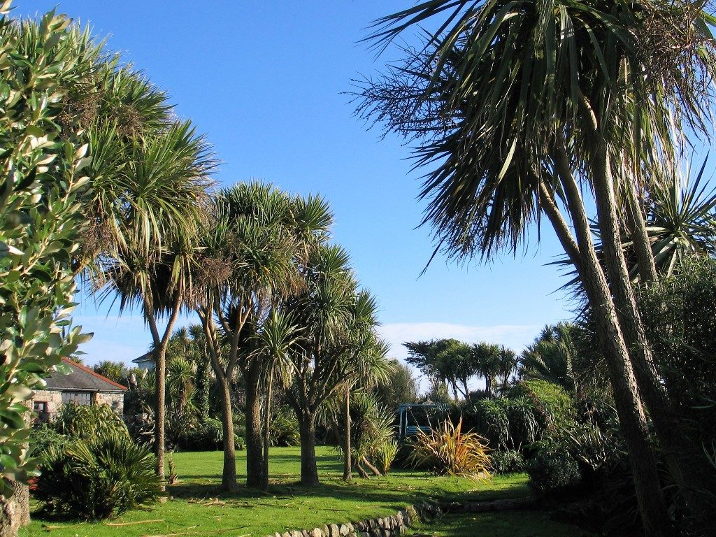 Palms flank the lawns - November Garden diary