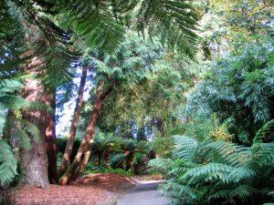 Sub tropical gardens -Trebah