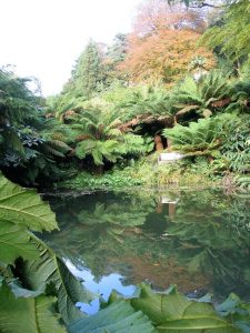 Tree ferns reflected in water