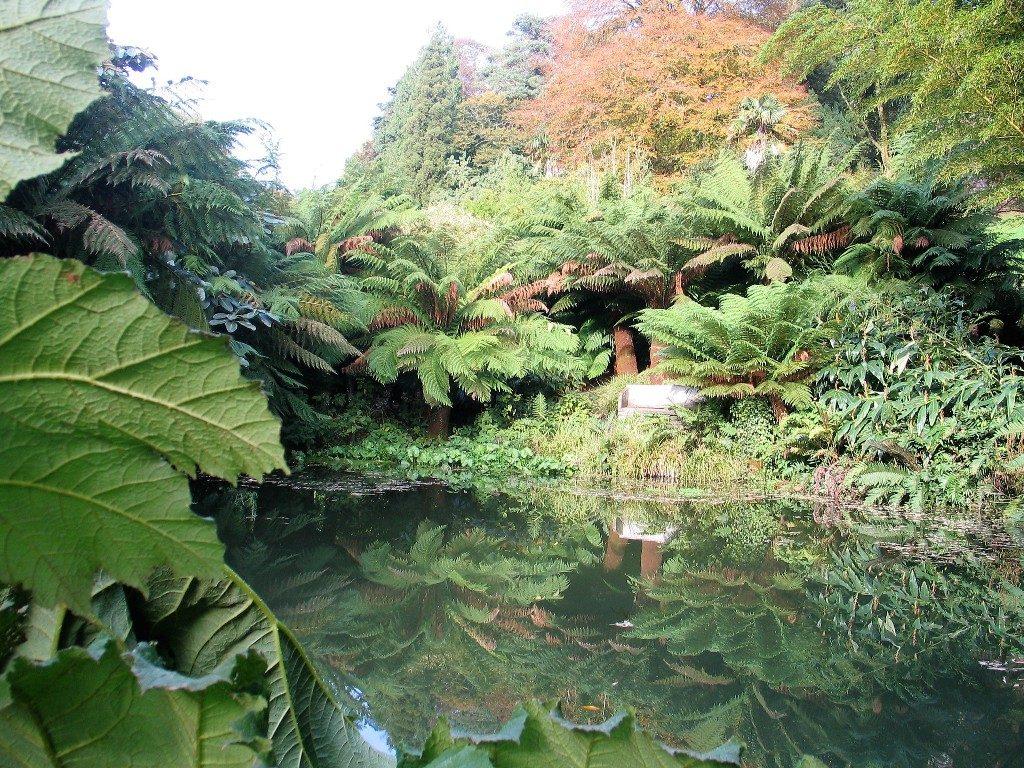 still waer and sub tropical planting -Trebah gardens