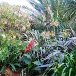 November garden diary - cannas and Phormiums add a jungle like look to the borders
