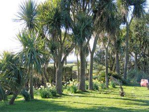 Easter breaks in Cornwall - palm avenue in our B&B garden