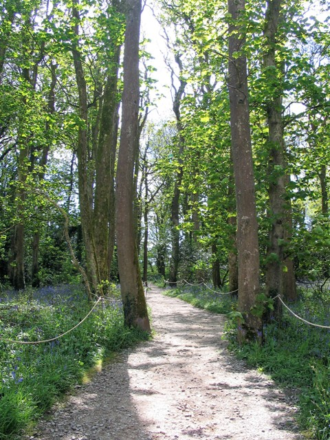 A woodland path swagged by ropes enclosing bluebell woods at Godolphin