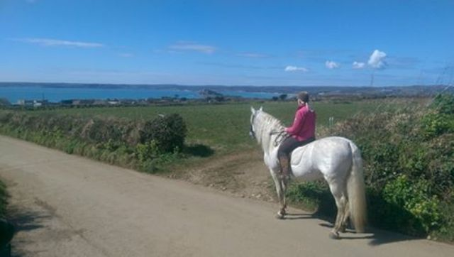 Grey spanish stallion Danilon on the country lane o Trebarvah with the backdrop of blue seas on Mount's Bay and St Michael's Mount