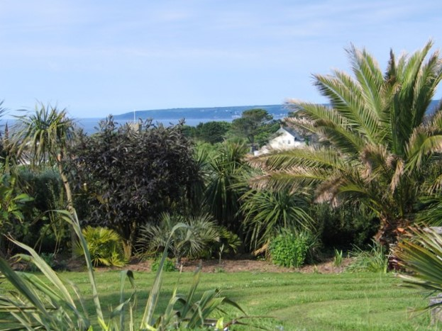 Palms and shrubs flanking a lawn above the sea