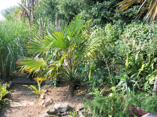 palms and aloes - sub tropical border, june garden