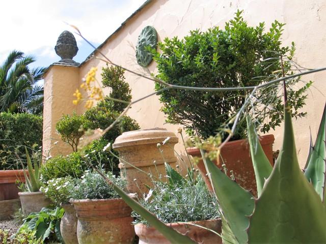 Terracotta pots in sunny courtyard