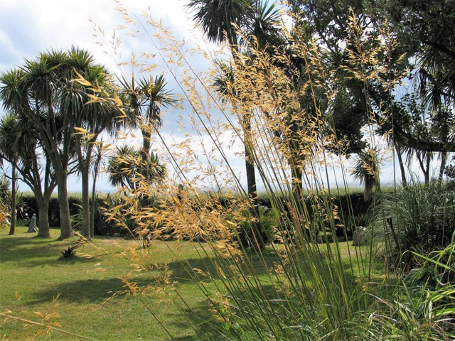 Lawns flanked by Golden Oat Grass and Cordylines - Ednovean farm