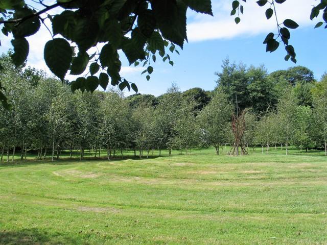 150 silver birch form a huge enclosure around a central mound and sculpture - Bonython Gardens