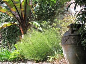 banana and greek pot- Trengwainton a garden for all seasons