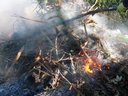 Crackling bonfire of autumn leaves