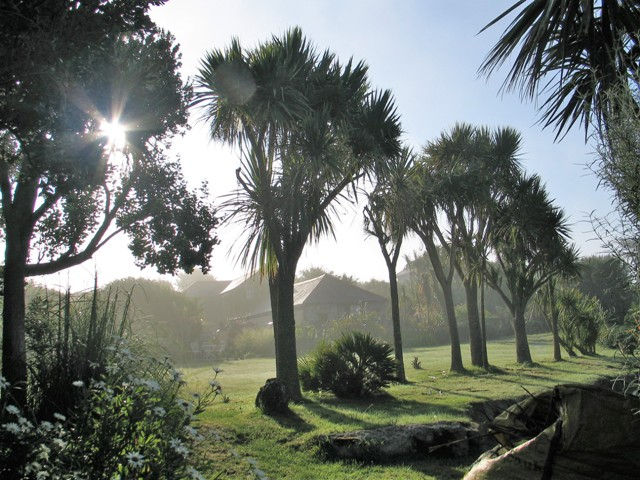 Palm trees in a morning mist - changing seasons