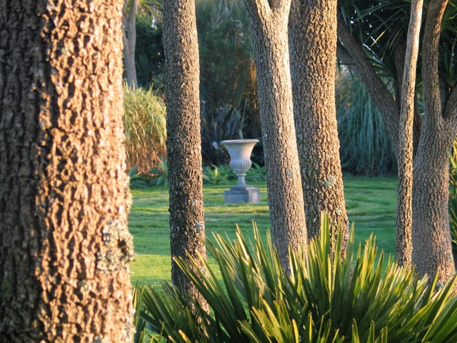 Urn glimpsed through pal trunks - November garden Ednovean Farm