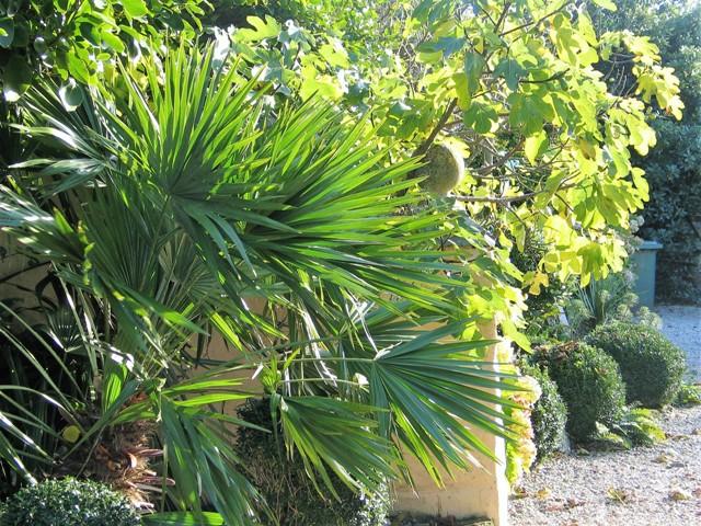 Autumn light on garden palms