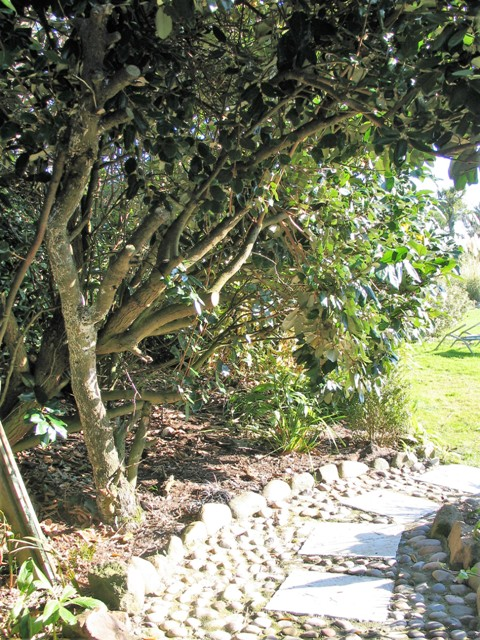 Trees arching over a garden path