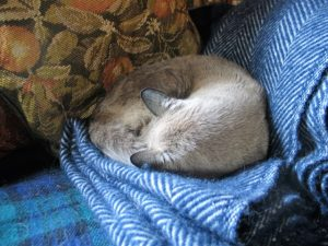 cat curled on cosy woolen throw - Tweedmill
