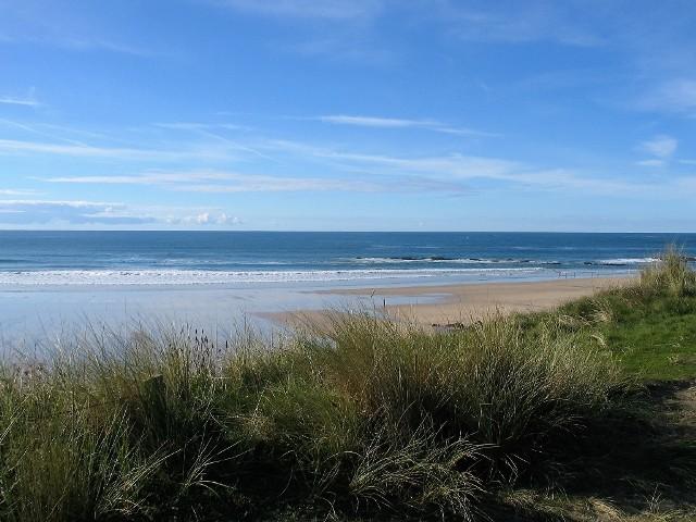beach seen through marram grass