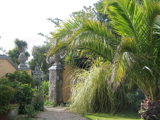 Palm flanked gateway from Mediterranean style courtyard - Ednovean Farm