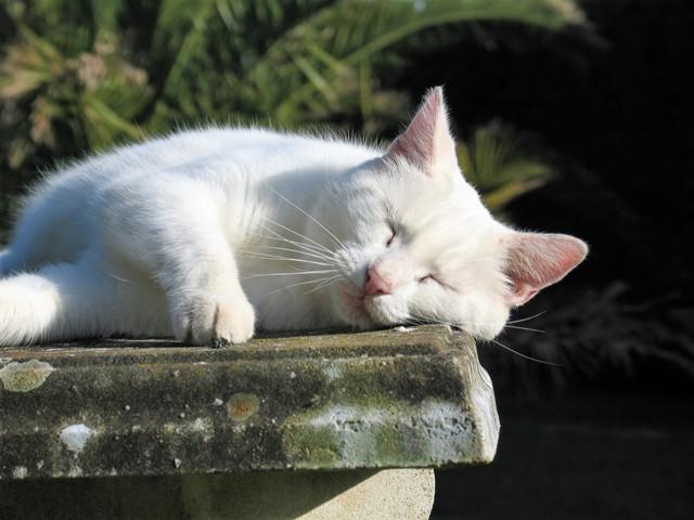 sleeping cat on sunny stone bench