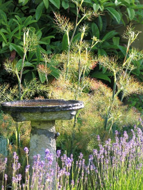 Summer days with the scent of Lavender an Fennel - summer dreams