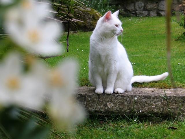 White cat sitting on step near white flower