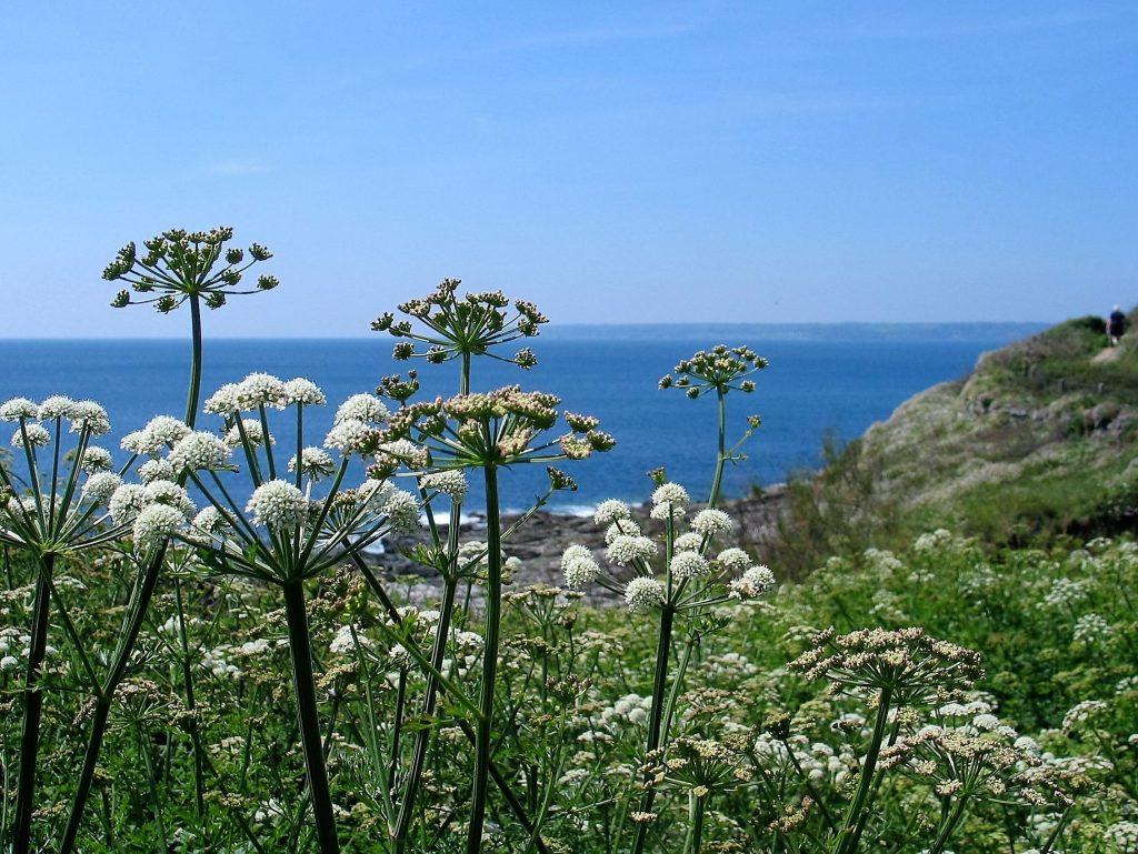 Spring Wildflowers silhouette against blue seas