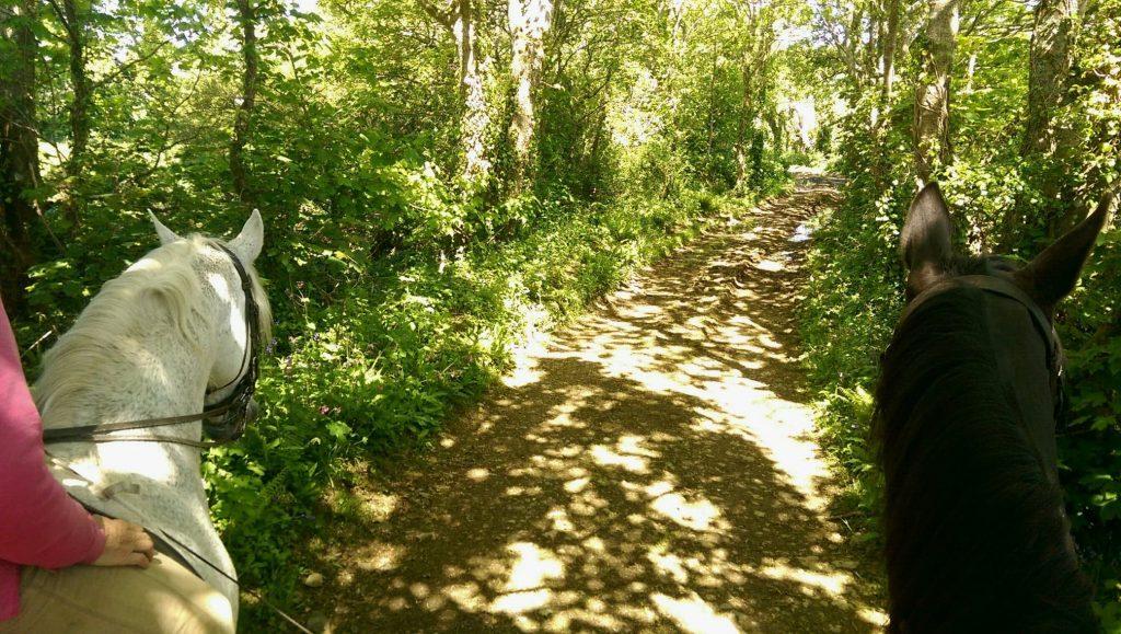 Verdatns shadows on a cornish lane